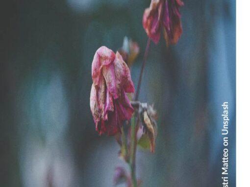 On Faith, Fear and Dying